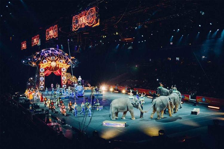 elefante circo