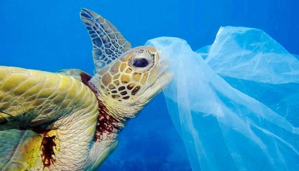Así es como en Reino Unido están muriendo miles de tortugas: ¿podemos imped..