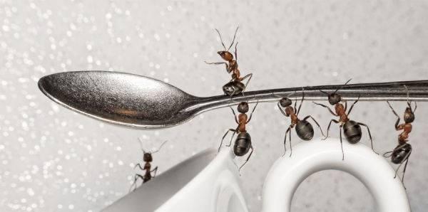 Cómo ahuyentar invasión de hormigas