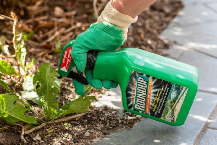 Una persona usa Roundup en un jardín