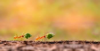 eliminar hormigas de las plantas con remedios caseros