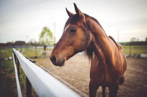 Joven activista crea un refugio para caballos maltratados en México