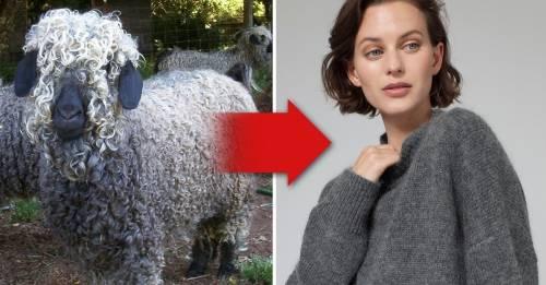 Crueldad animal en la industria de la moda: las marcas más grandes del mundo ..