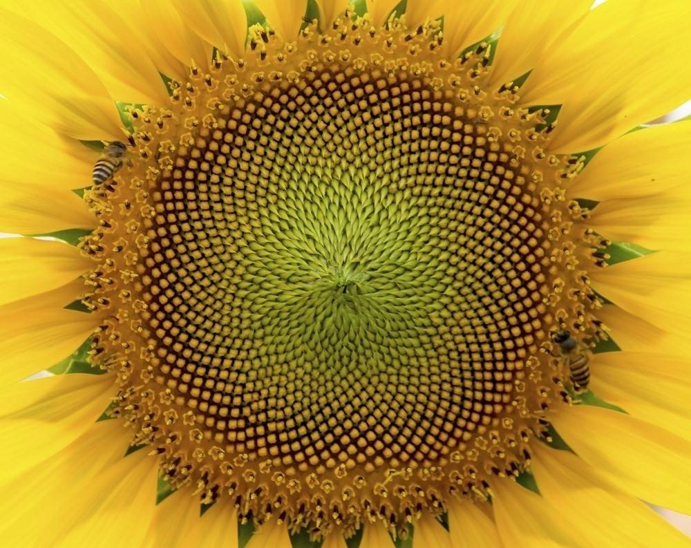 Asombrosas especies vegetales geométricas