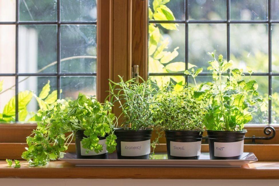 Las plantas se encuentran cómodas entre los 15 y 25ºC