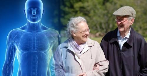 Descubre cómo el tamaño del cuerpo influye en la esperanza de vida