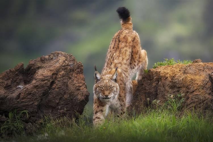 6 - \'Wild look\' @saavedraphotography España Sergio Saavedra