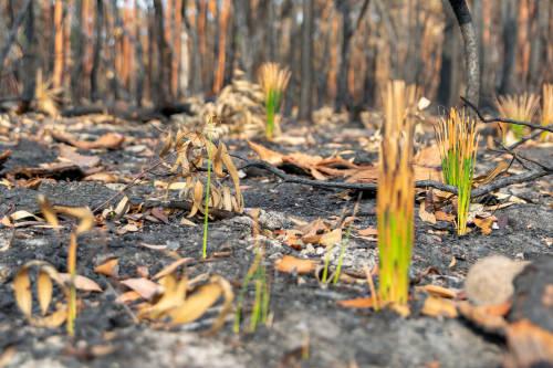 Algunas plantas empiezan a florecer después de los incendios