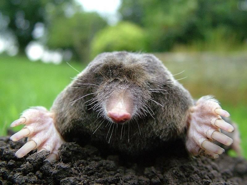 Video: cómo ahuyentar topos en tu huerto