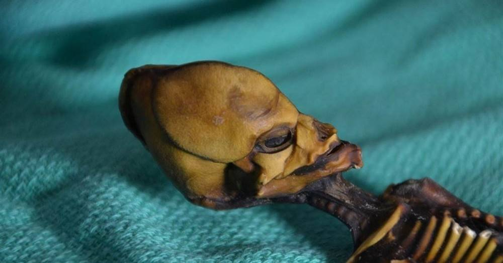 La ciencia revela el misterio del esqueleto minúsculo con forma humana encont..