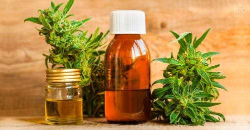 La OMS anuncia oficialmente que ya no considerará droga a la marihuana