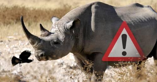 Muere el último rinoceronte negro de Kenia: otra especie que no llegamos a salvar