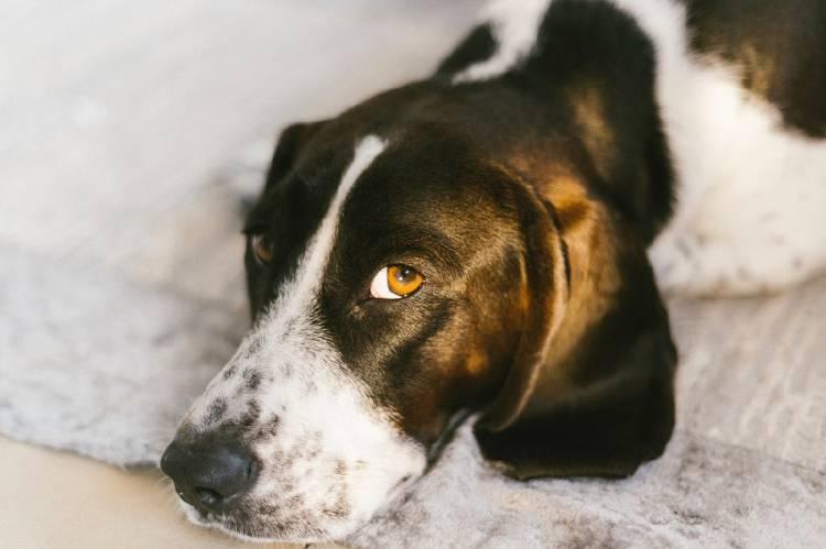 Los perros pueden detectar el cáncer