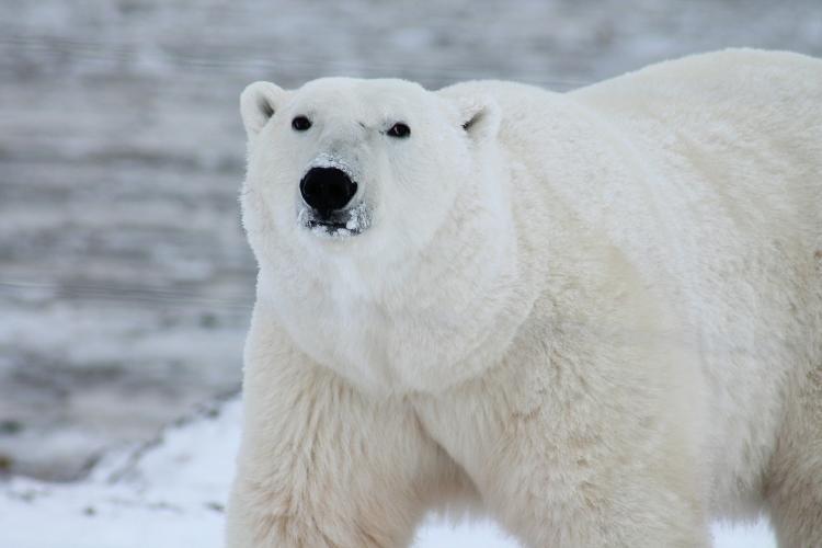 La Sexta Gran Extinción de especies está sucediendo ahora