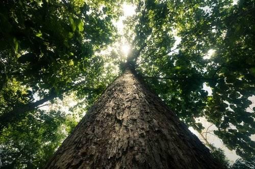 Cómo funciona la red oculta bajo la tierra que permite a los árboles atacarse y ayudarse entre sí