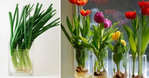 15 Flores y vegetales que puedes cultivar fácil en un vaso con agua