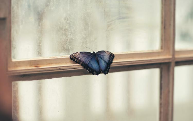 significado de cuando llega una mariposa a tu casa