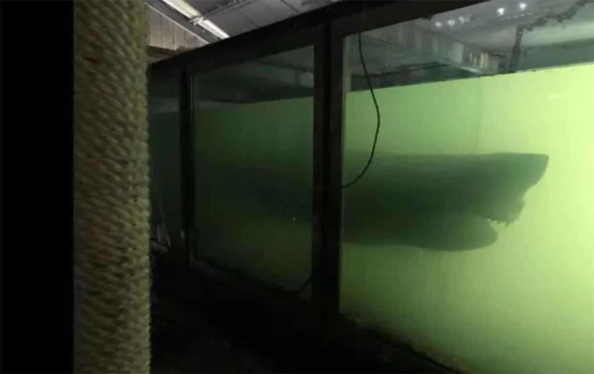 Hallan un tiburón de cinco metros en un parque acuático cerrado en 2012