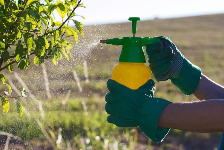 Pesticidas: encuentran glifosato en bebidas alcohólicas