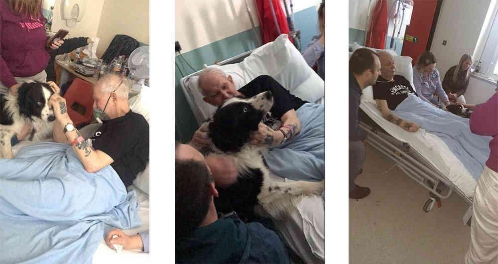 El perro border collie superó todas las estrictas normas de un hospital de Estados Unidos