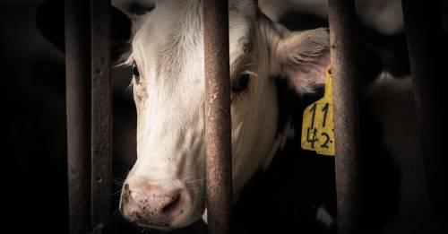 Esta es la razón por la que no puedes ser ambientalista si comes carne