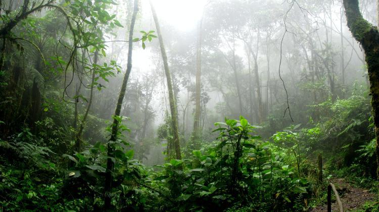 Bosque nublado de Colombia
