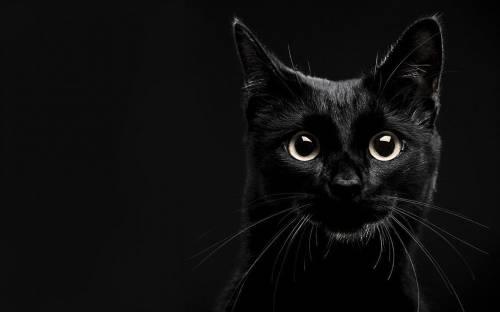 10 mitos sobre gatos que seguro pensaste que eran verdad