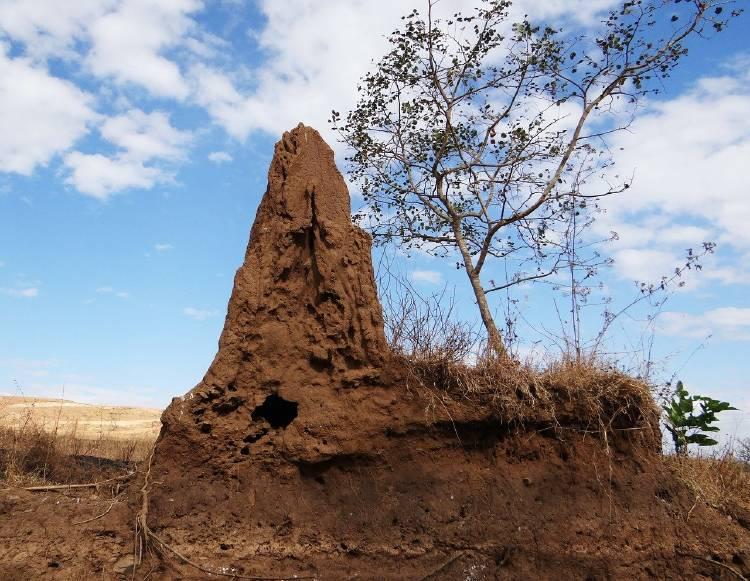 termite-hill-266587_1280