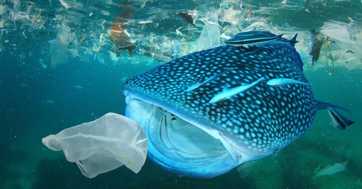 No es plástico ni son peces: esto también termina en los océanos y les hace mucho daño