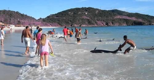 Estos delfines tienen una segunda oportunidad