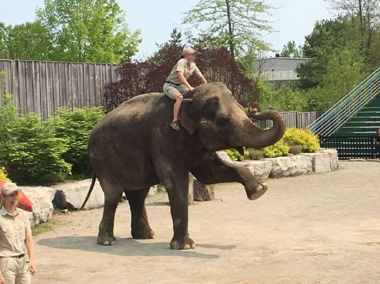 waza_elephant_performance