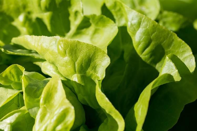 vegetal de hoja verde
