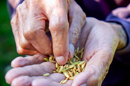 La bóveda del fin del mundo ya resguarda 1 millón de semillas