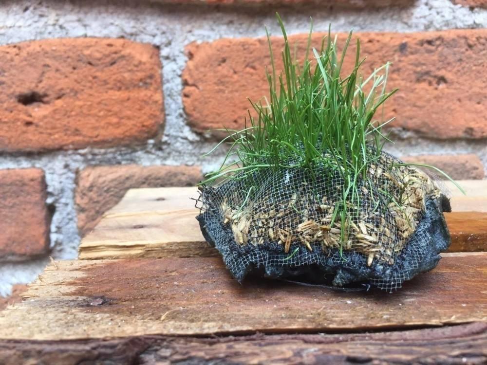 Crean un método para hacer crecer plantas donde no hay agua que te parecerá ..