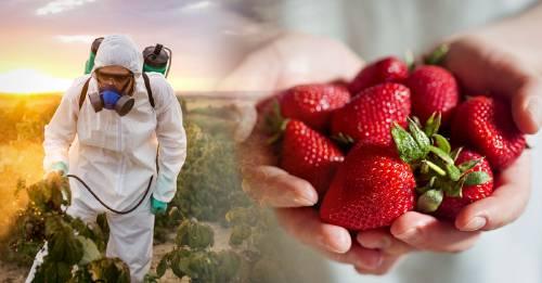 Estas son las frutas y verduras con más y menos pesticidas