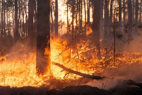 Incendios forestales han destruido más de 70 casas en Australia