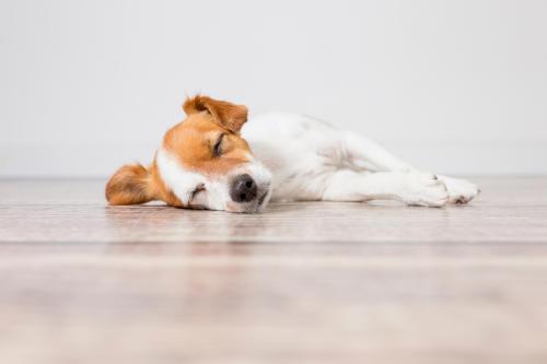 perro-durmiendo