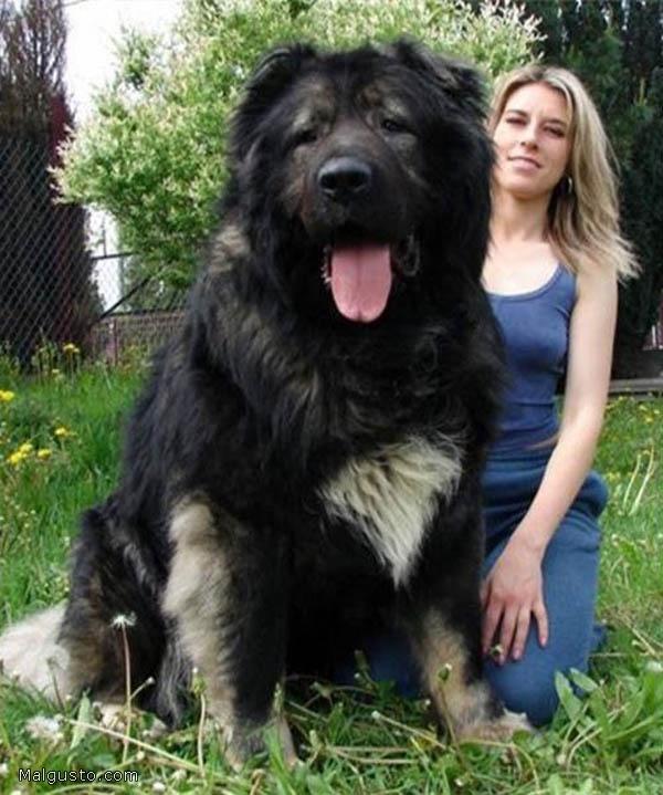 200709_perro-gigante