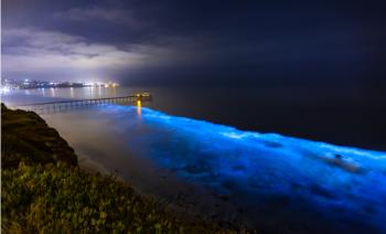 Hotel en Holbox permite disfrutar de la bioluminiscencia