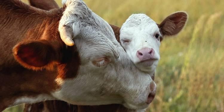 ¿No puedes o no quieres ser vegetariano? También puedes ayudar a los animales haciendo esto
