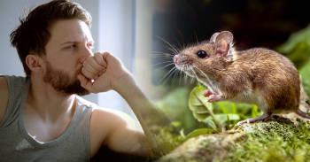 hombre pensando frente a la ventana sobre fabula del raton