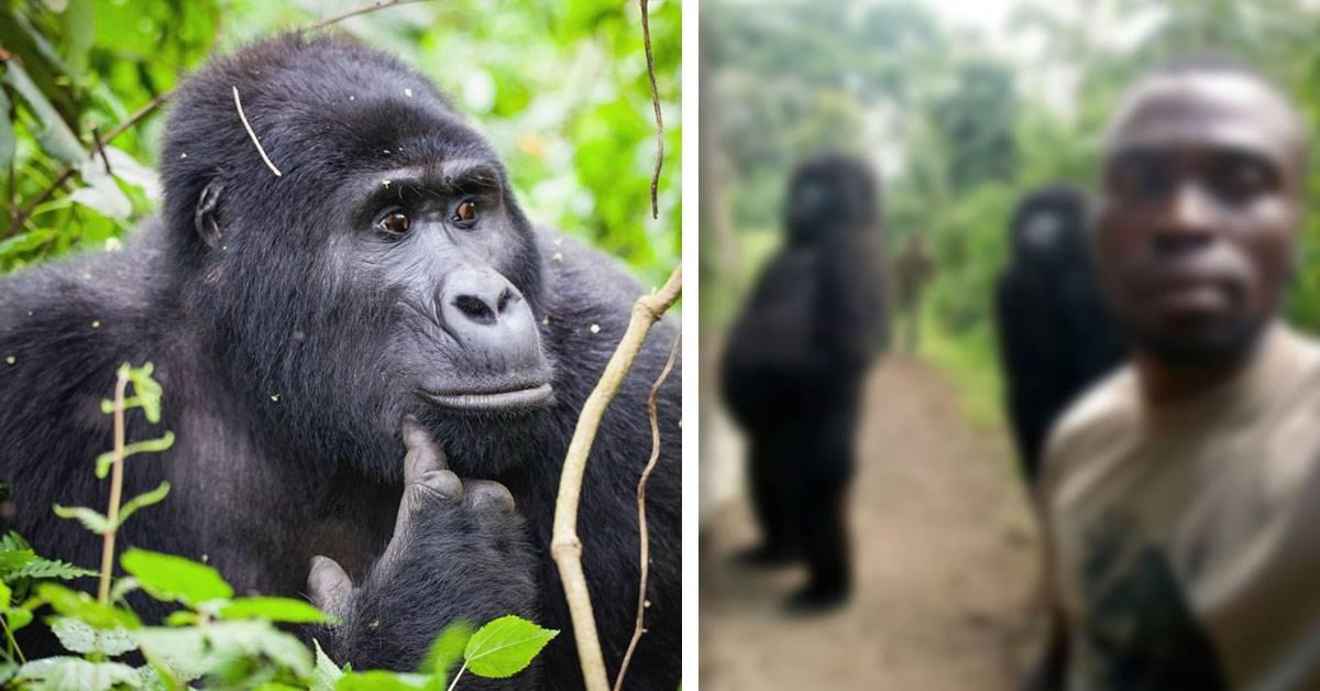 Esto es lo que nadie te cuenta sobre la selfie con gorilas que se ha vuelto vira
