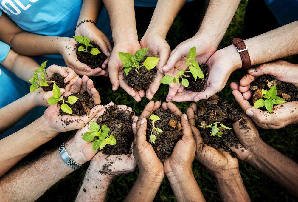 Recolectan plantas en peligro de extinción para evitar que desaparezcan