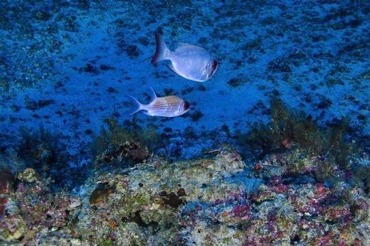 Arrecife de coral del Amazonas