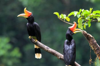 aves indonesia