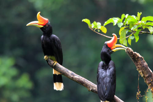 10 aves que desaparecerán en 20 años por la deforestación