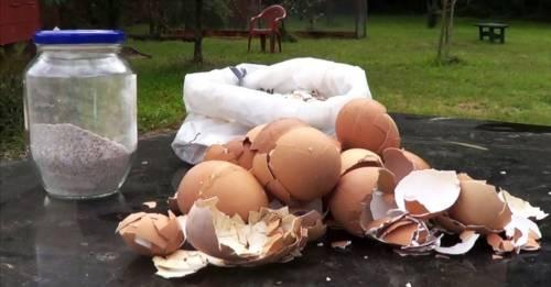 7 usos de las cáscara de huevo en nuestro jardín o huerto