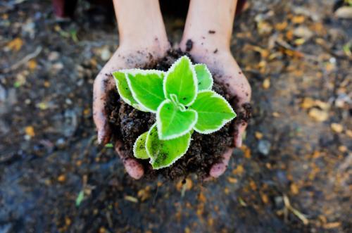 10 ejemplos de restauración ecológica para tener en cuenta