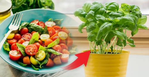9 vegetales y hierbas que puedes comer una vez y hacer que vuelvan a crecer