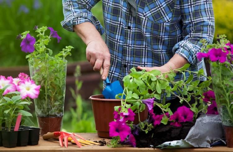flores plantas jardineria